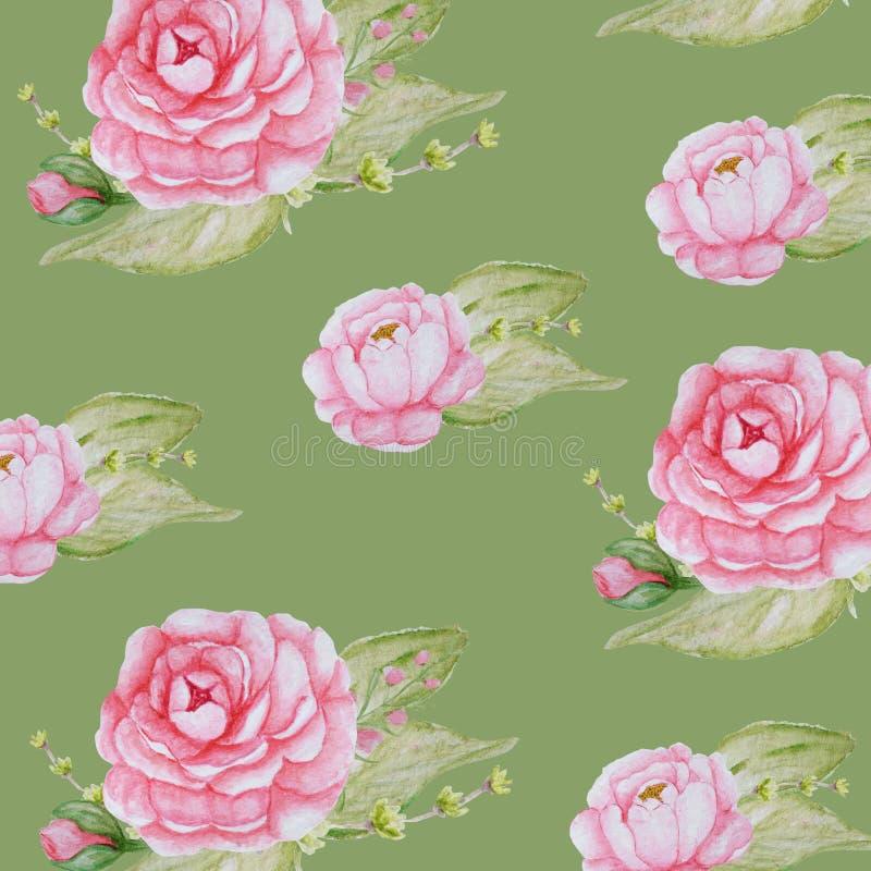 水彩牡丹花纹花样,桃红色牡丹纹理,在绿色背景的浪漫剪贴薄纸 向量例证