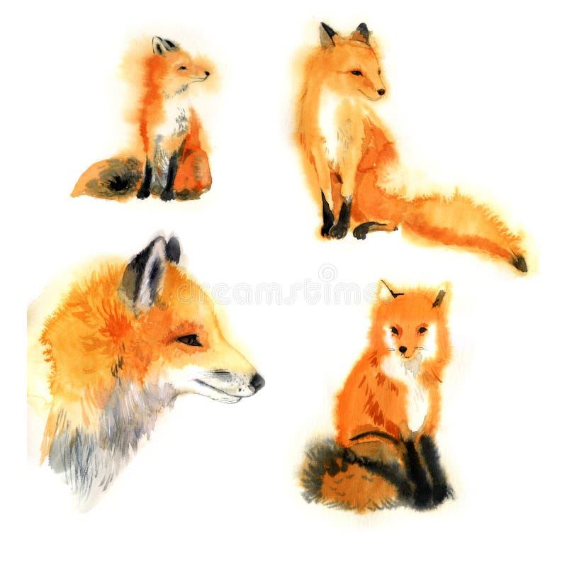 水彩狐狸汇集 逗人喜爱的动物 愉快的动物园-例证 免版税库存照片
