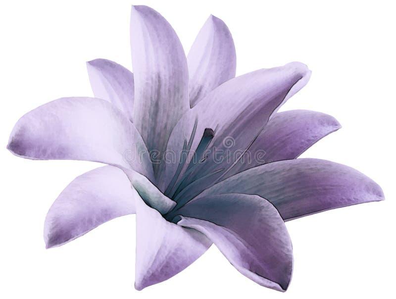 水彩百合紫色花 隔绝与在白色背景的裁减路线 对设计 特写镜头 向量例证
