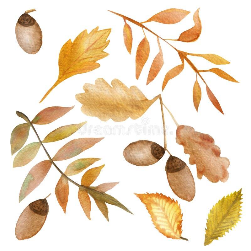 水彩秋天套与叶子和橡子的橡木分支 皇族释放例证