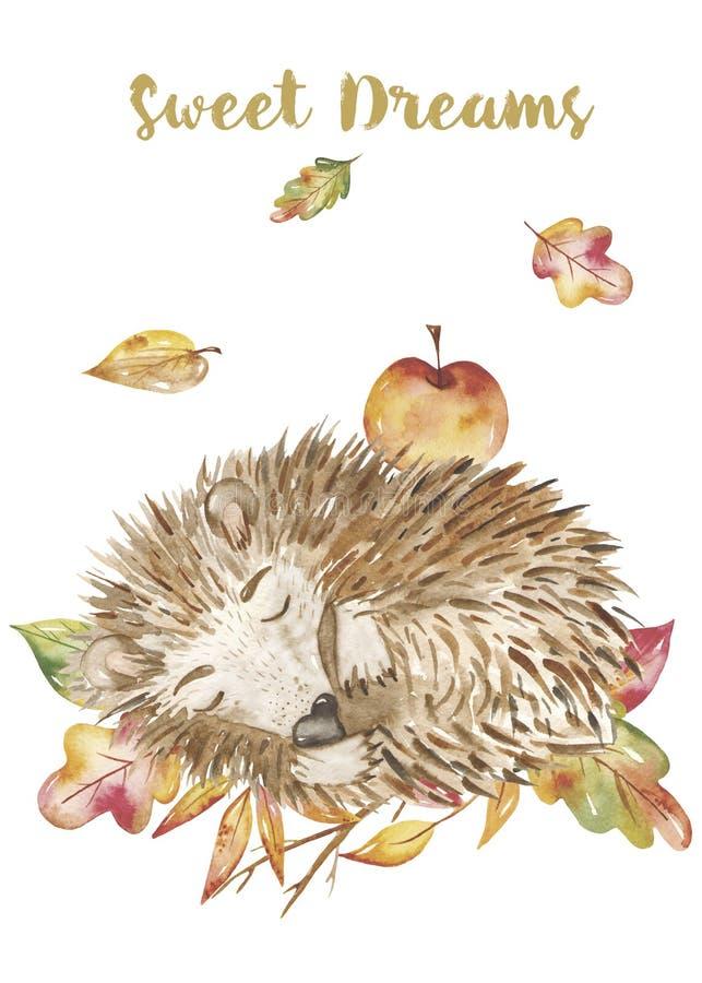 水彩秋天集合,与一只逗人喜爱的动画片睡觉猬的卡片在叶子 向量例证