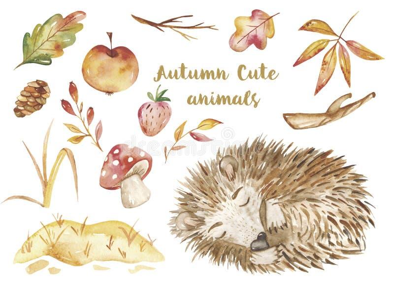 水彩秋天集合,与一只逗人喜爱的动画片睡觉猬的卡片在叶子 库存例证