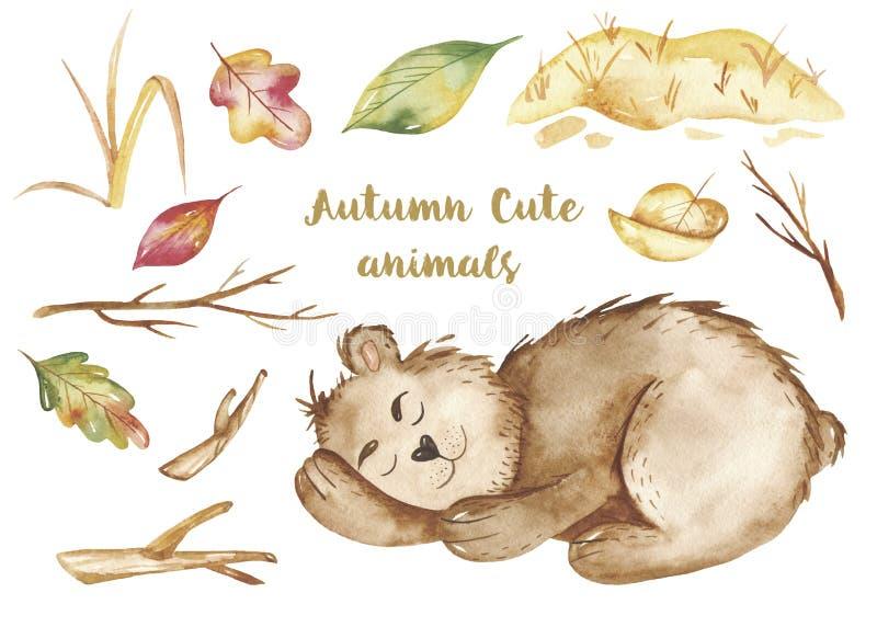 水彩秋天集合,与一头逗人喜爱的动画片睡觉熊,桶的卡片蜂蜜,木头 库存例证