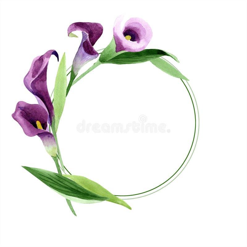水彩紫色水芋属花 花卉植物的花 框架边界装饰品正方形 向量例证