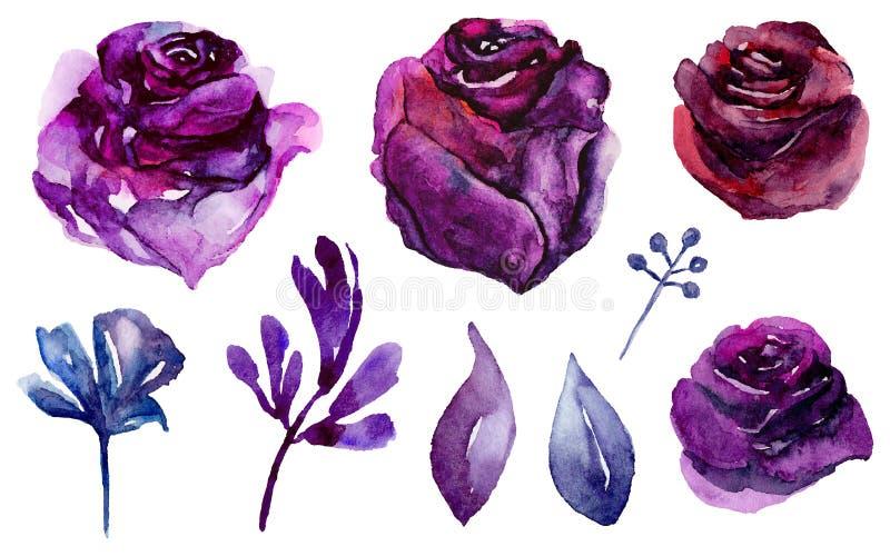 水彩紫色花 丁香和蓝色花卉传染媒介 向量例证