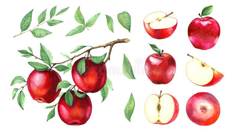 水彩红色苹果的大收藏量 免版税图库摄影
