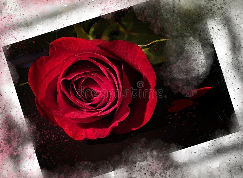 水彩绘了美丽的风格化红色玫瑰 向量例证