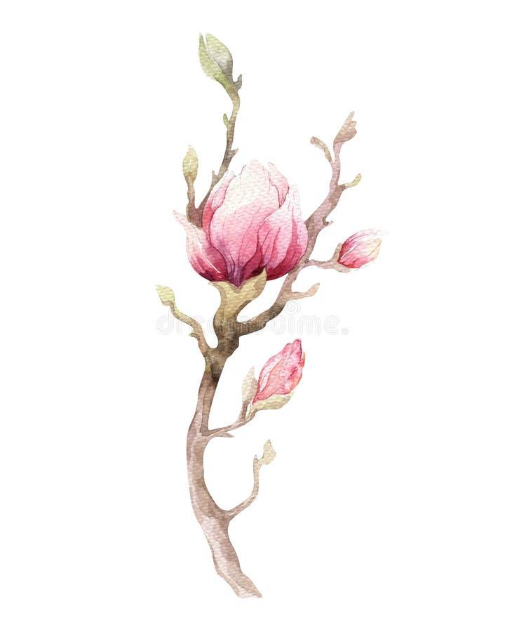 水彩绘画木兰开花花墙纸装饰 向量例证
