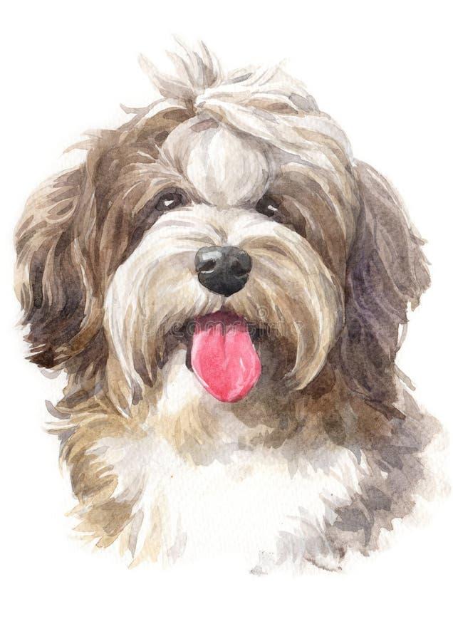 水彩绘画,狗形状,粗野的Havanese 046 皇族释放例证
