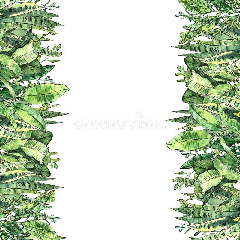 水彩绿叶汇集 在生态样式的手画垂直的背景模板 库存例证