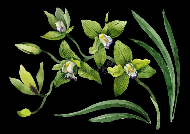 水彩绿色兰花花 花卉植物的花 被隔绝的例证元素 免版税库存照片