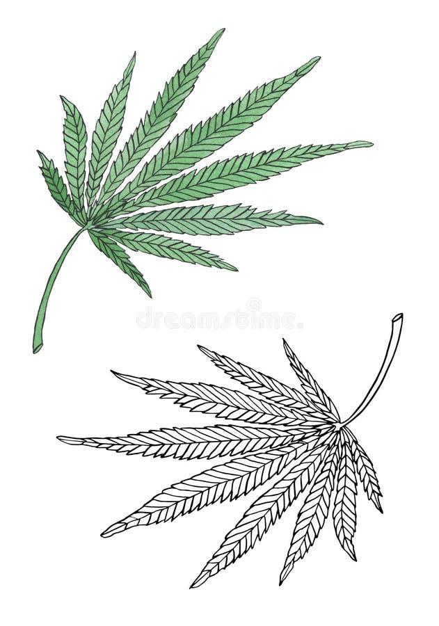水彩绿色大麻事假例证分支  向量例证
