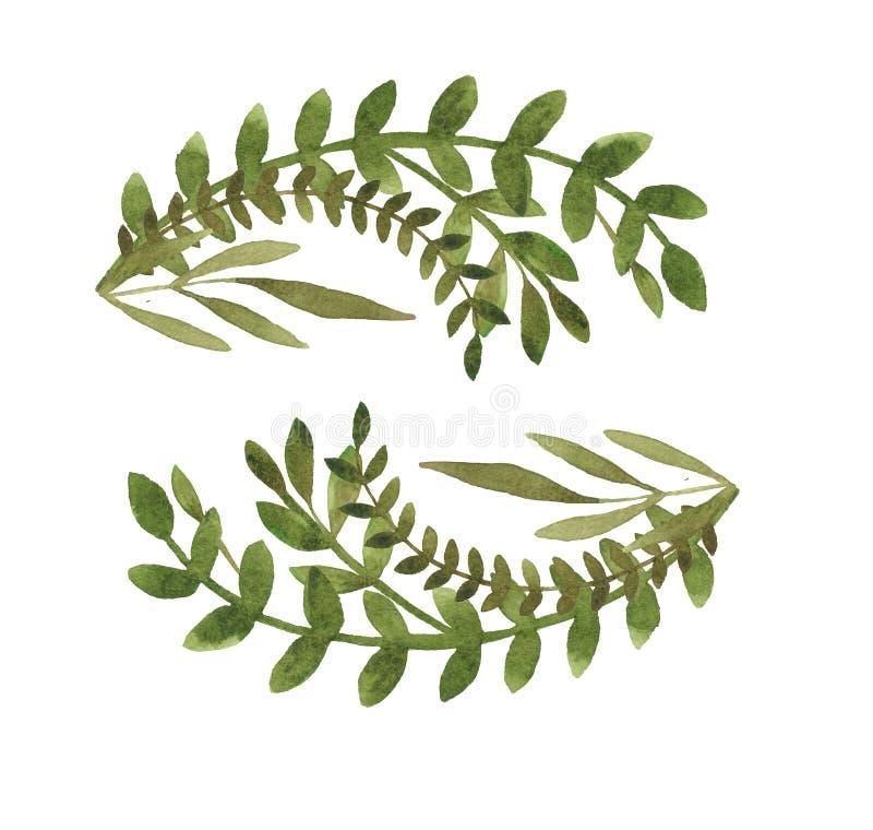 水彩花元素枝叶 用于设计的装饰元件 图库摄影