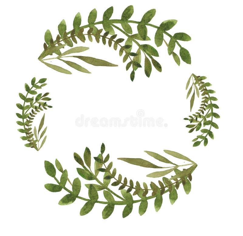 水彩花元素枝叶 用于设计的装饰元件 免版税图库摄影