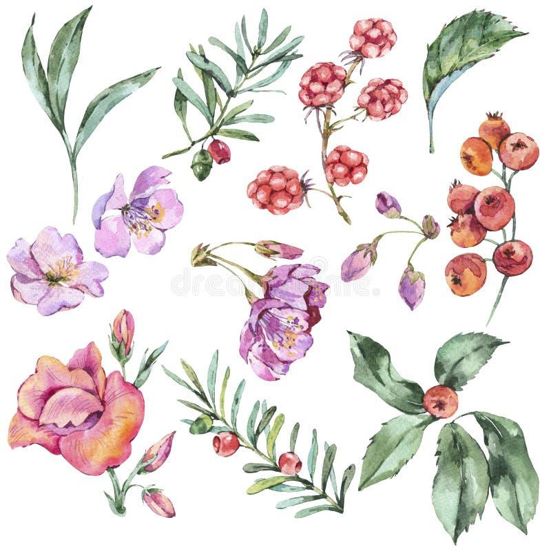 水彩花卉套夏天花,莓果,野花 向量例证