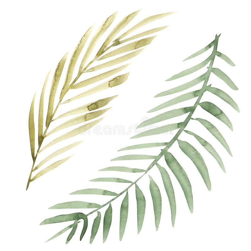 水彩花卉集合 与叶子的五颜六色的绿色花卉收藏,画的水彩 套您的花卉元素 向量例证