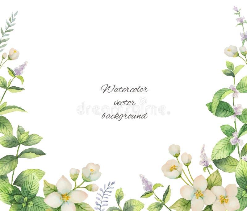 水彩花和在白色背景隔绝的分支茉莉花传染媒介框架  库存例证