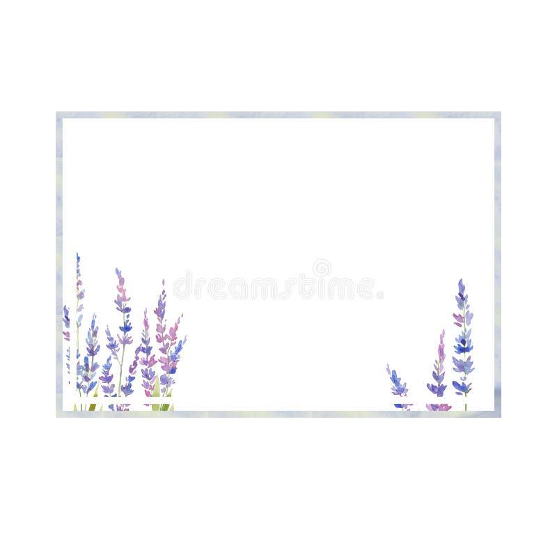 水彩花淡紫色框架  花卉provencal样式设计 手拉的领域花 库存例证