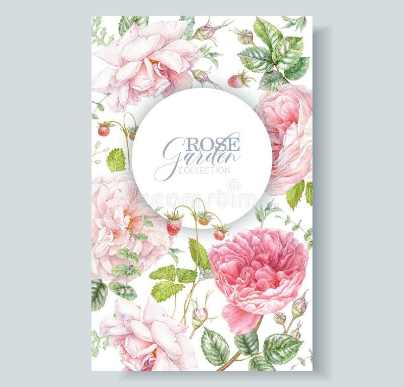 水彩花环,粉红玫瑰和浆果 库存照片