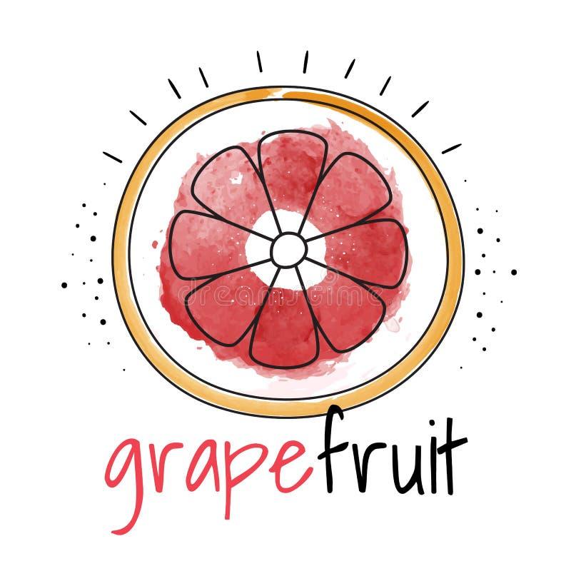 水彩葡萄柚 也corel凹道例证向量 皇族释放例证
