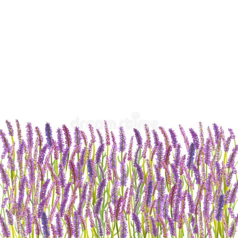 水彩葡萄酒手拉的淡紫色开花框架 向量例证