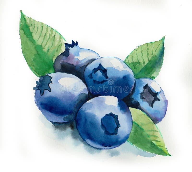 水彩蓝莓 库存例证