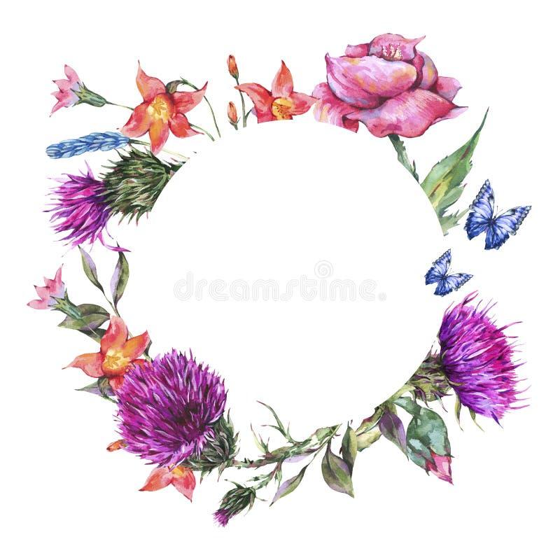 水彩蓟,鸦片,蓝色蝴蝶,围绕框架的野花,草甸草本 皇族释放例证
