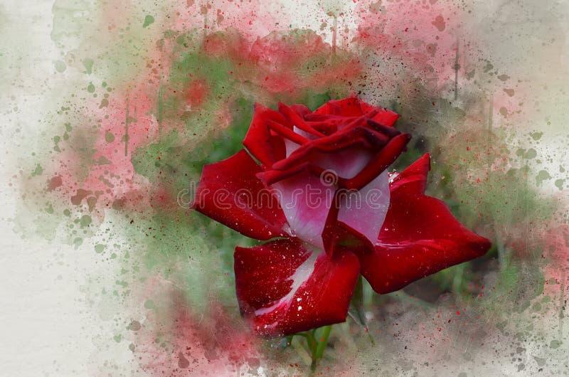 水彩被绘的美丽的红色玫瑰 向量例证
