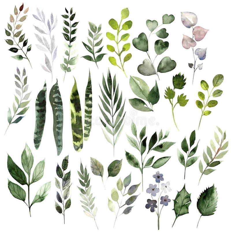 水彩设置用不同的叶子 手画元素 在白色背景隔绝的花卉例证 向量例证