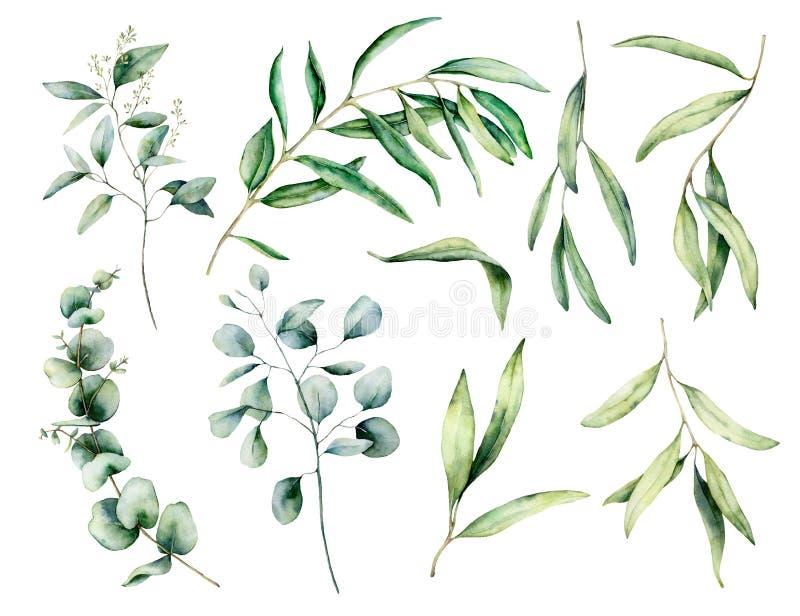 水彩设置用橄榄和玉树分支,离开 : 皇族释放例证