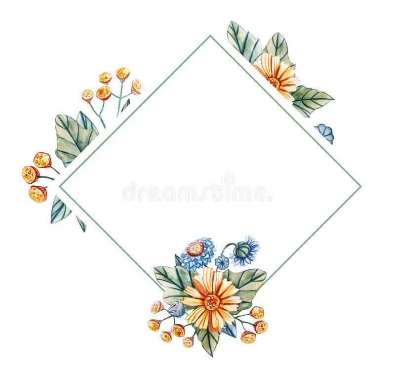 水彩野花花卉方形的框架  皇族释放例证