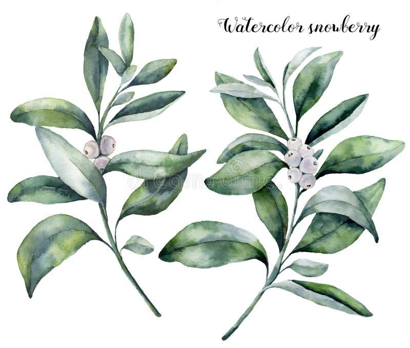 水彩雪果集合 手画雪果分支用在白色背景隔绝的白色莓果 圣诞节 皇族释放例证