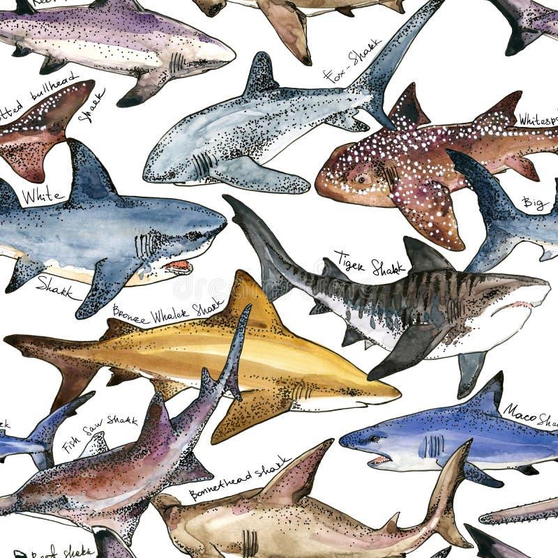 水彩鲨鱼无缝的样式 向量例证