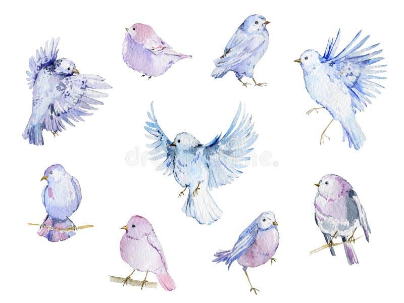 水彩鸟汇集 在白色背景的被隔绝的元素 皇族释放例证