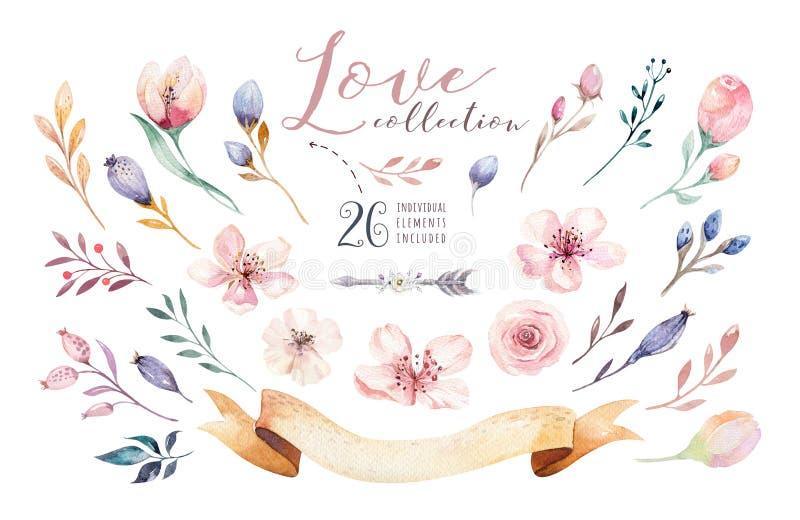 水彩boho花卉集合 漂泊自然框架:叶子,羽毛,花,花束 背景查出的白色 皇族释放例证