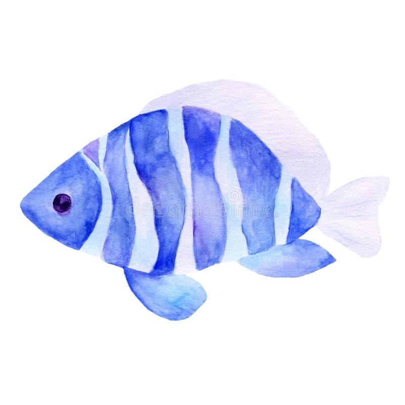 水族馆、一个现实水族馆有鱼的和海藻 水族馆的水彩例证有在白色隔绝的鱼的 皇族释放例证