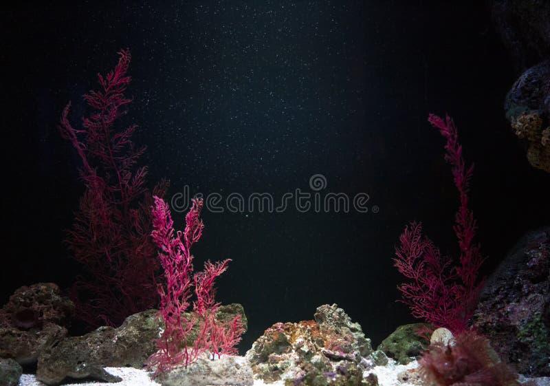 水族馆中的海葵 库存图片