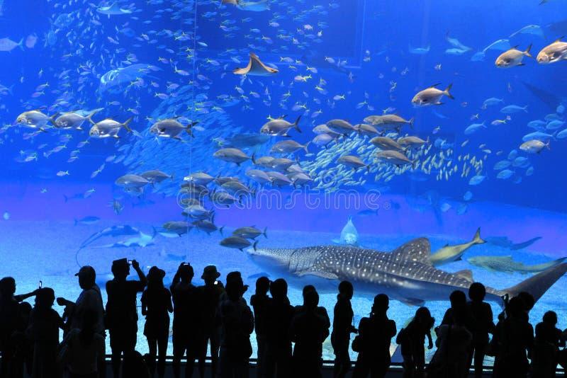 水族馆冲绳岛 库存照片