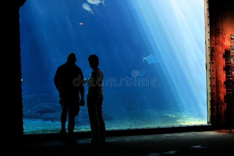 水族馆夫妇 免版税库存照片