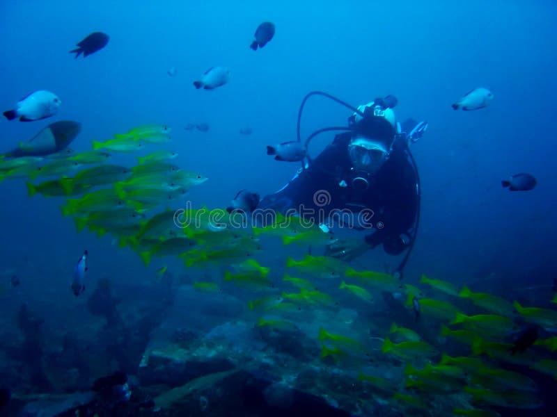 水族馆潜水员菲律宾水肺 免版税库存图片