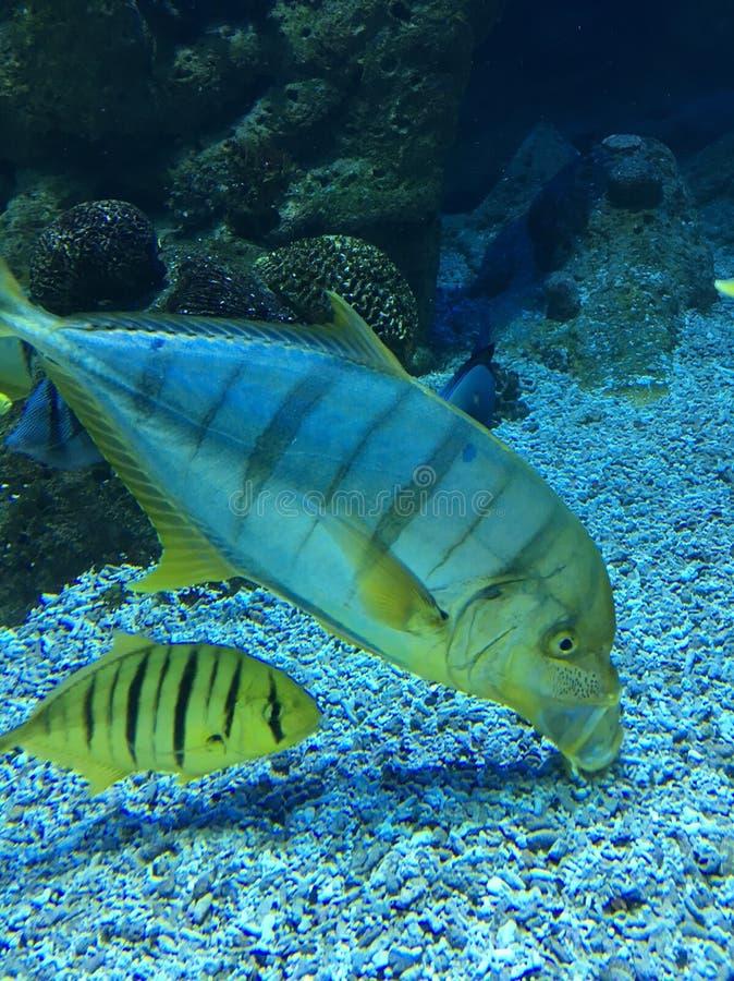 水族馆热带鱼关闭  库存图片