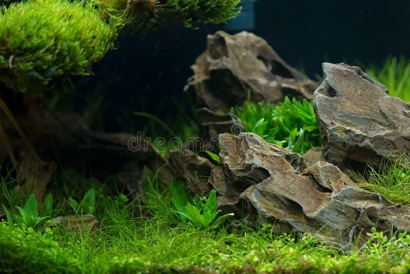 水族馆种植装饰,水生蕨类植物,并且水族馆植物增长 免版税库存图片
