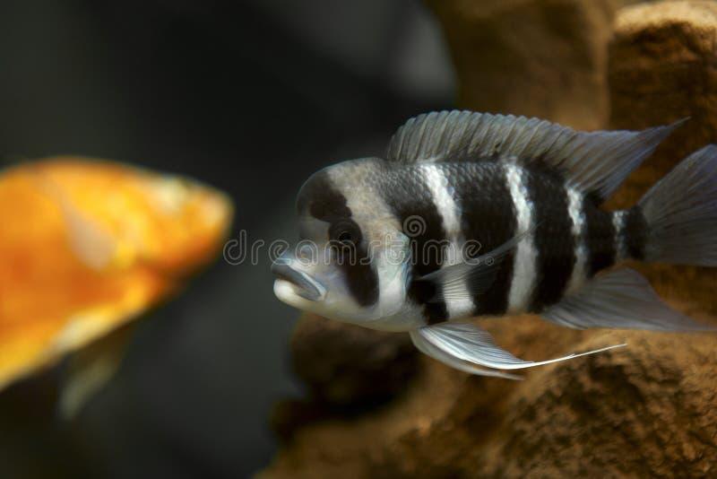 水族馆鱼数据条 库存照片