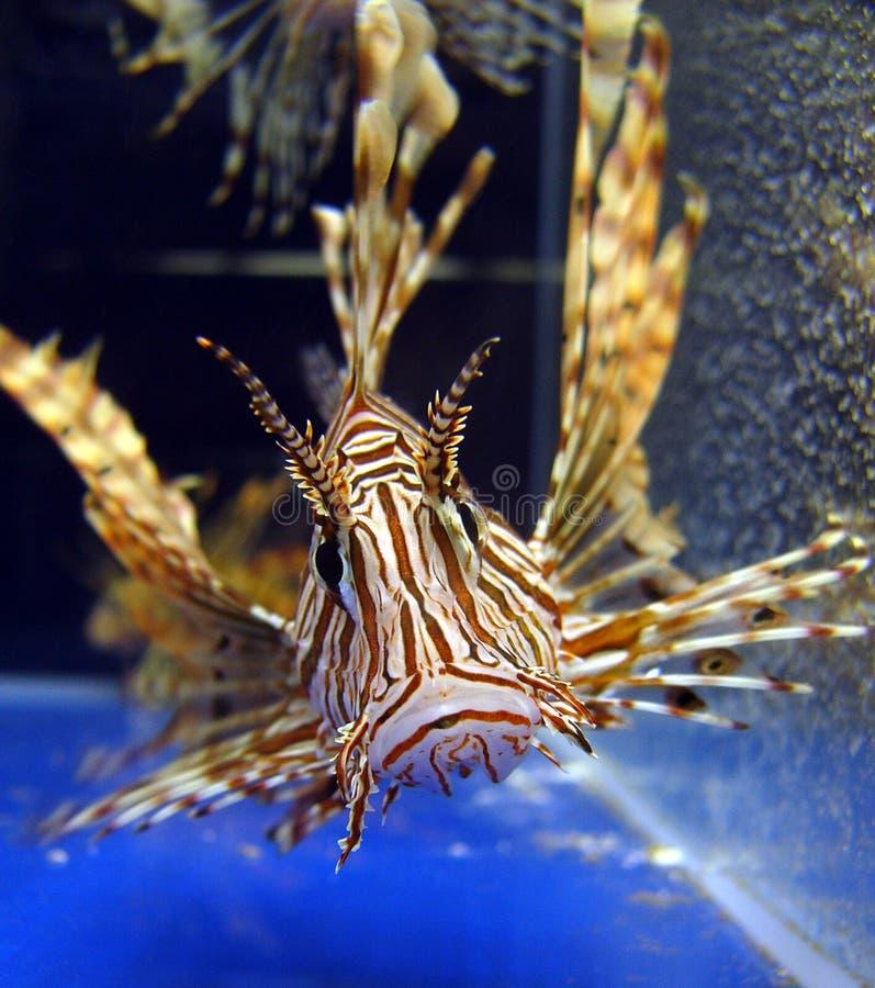 水族馆鱼狮子宠物店 库存图片