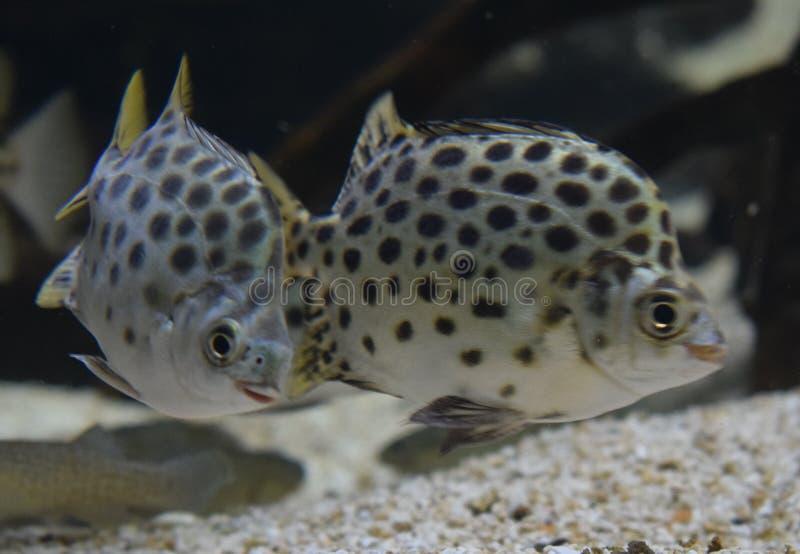 水族馆 图库摄影