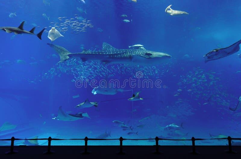 Download 水族馆 库存图片. 图片 包括有 鲨鱼, 海运, 人群, 树脂, 孩子, 移动, 娱乐, 最大, 系列, 硕大 - 15675281
