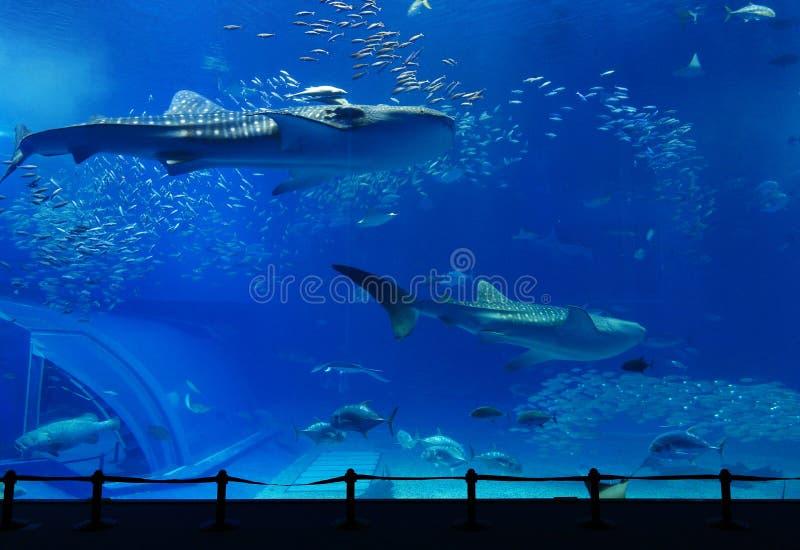 水族馆 免版税库存照片