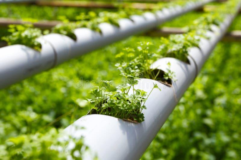 水栽法种植园农场 库存照片