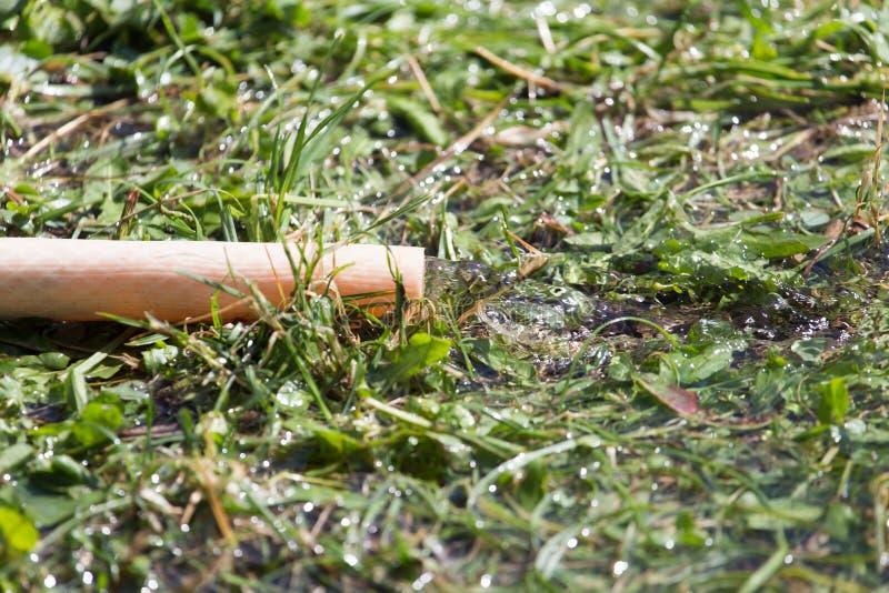 水水管到草里 库存照片