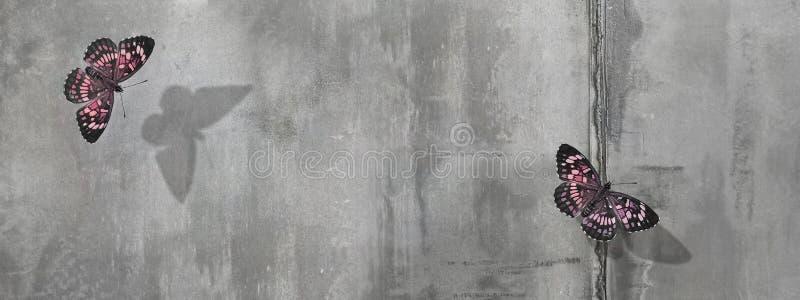 水泥墙背景中美丽的粉红蝴蝶 文本的可用空间 横幅格式 图库摄影
